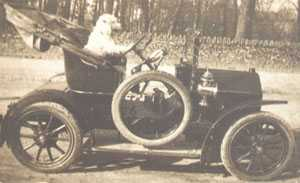 Dog driving Dr Hitchings' car