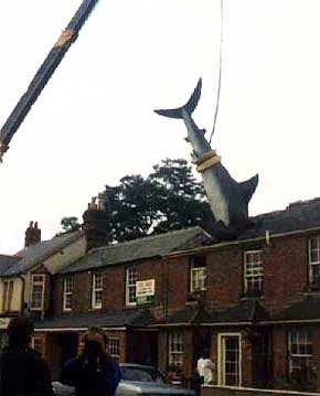 Shark being installed